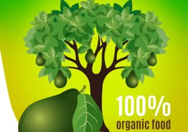 Quality Avocado – Hand Picking Avocados –  Avocadomonthly.com