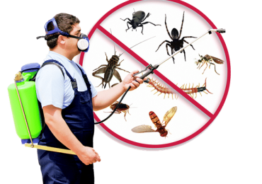Pest control Hillingdon