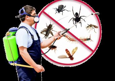 Pest control Ickenham